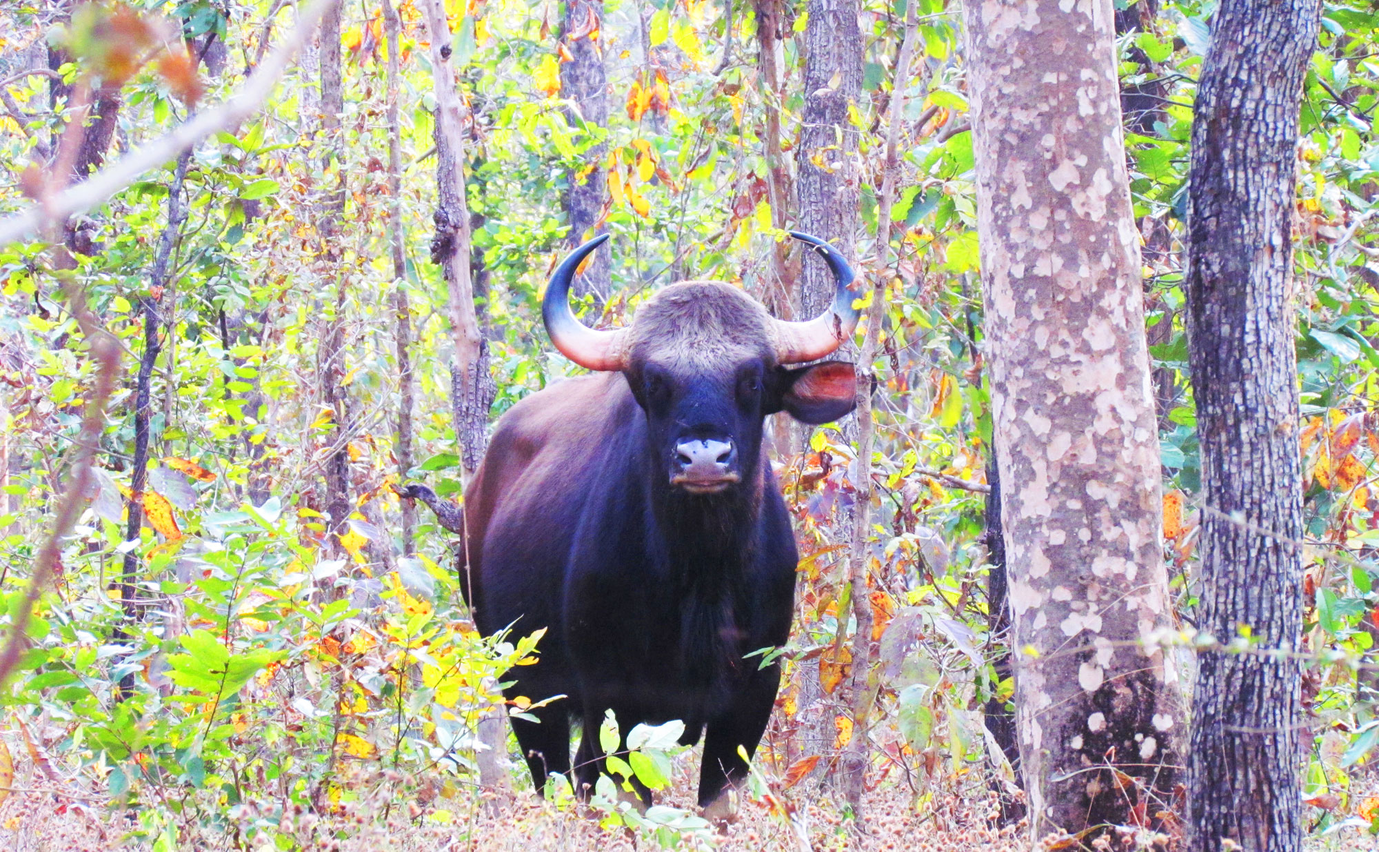 Chhattisgarh Wildlife